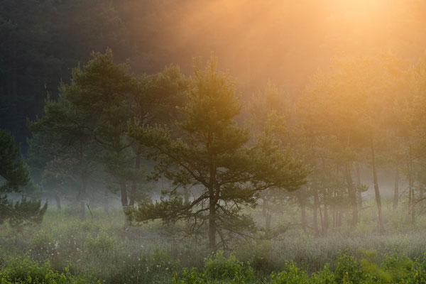Morgentliche Moor-Stimmung [200 mm / f11 / ISO 64 / 1/15 Sek.]