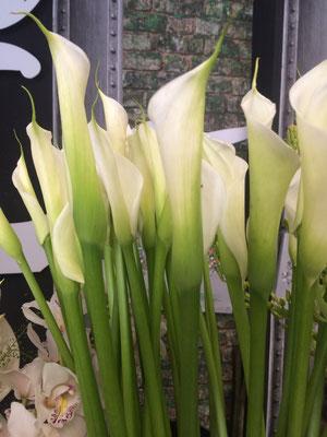 Plantes Pot Noix de coco Fleuriste Lambersart