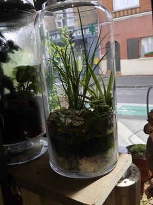 Térrarium Plantes Noix de coco Fleuriste Lambersart