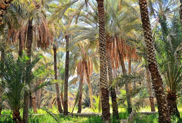 Oase Al Ain