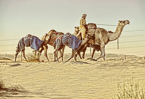 auf dem Weg nach Al Ain
