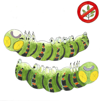 Der Sommerflieder ist zwar ein guter Nektarlieferant für Schmetterlinge, doch seine Blätter schmecken den Raupen gar nicht. Indem er sich vor allem im Wald und am Waldrand ausbreitet, verdrängt er dort die Pflanzen, die den Raupen als Nahrung dienen.