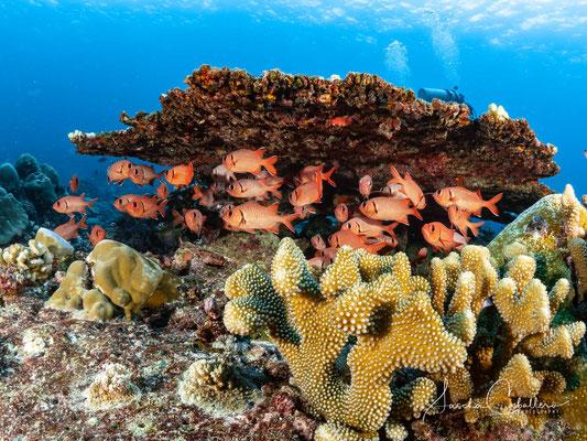 Diving Christmas Island