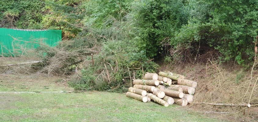 Bestes Fichenholz, schon etwas trocken