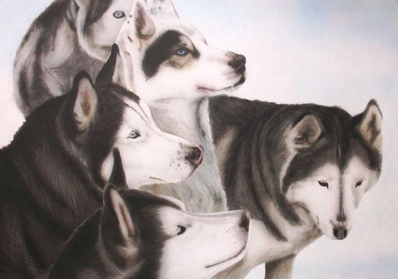 Siberian- Huskies, Airbrushportrait nach einer Fotovorlage, Airbrushpapier, 50x60 cm (2013)