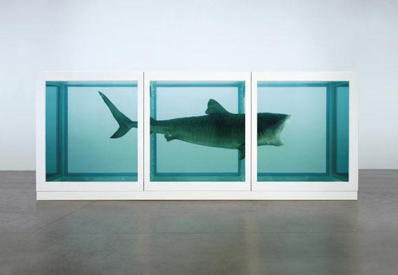 De Haai van Hirst