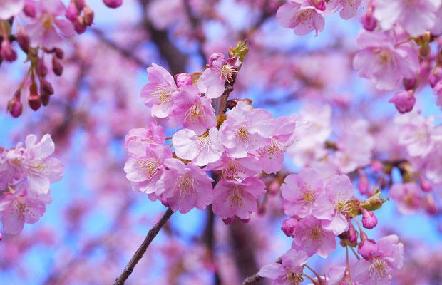 Ô Secret Beauté, la beauté au coeur des plantes et des fleurs
