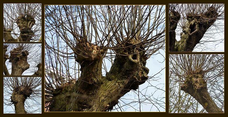 Baumgespenster