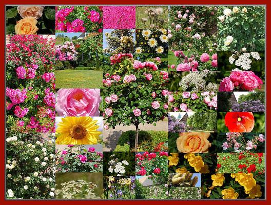Blumen, Blumen, Blumen