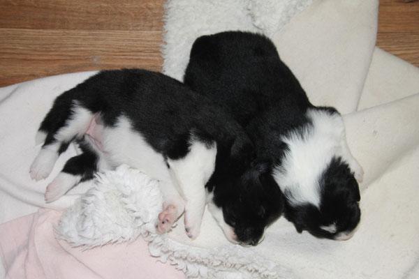 Die zwei Schwestern kuscheln.