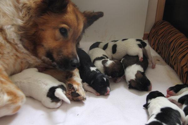 liebevolle Mama im Dienst