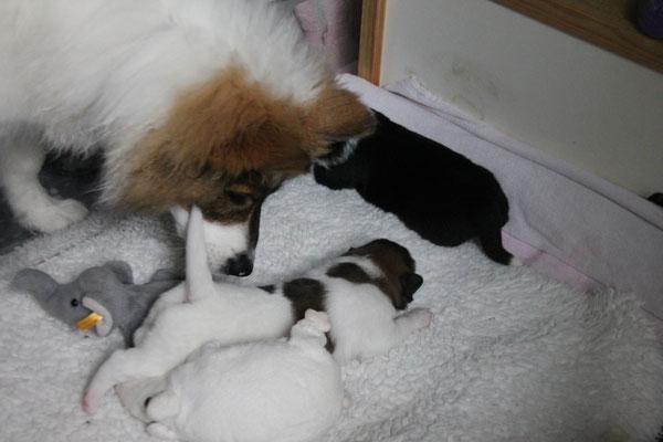 Cailin fand die Kleinen süß