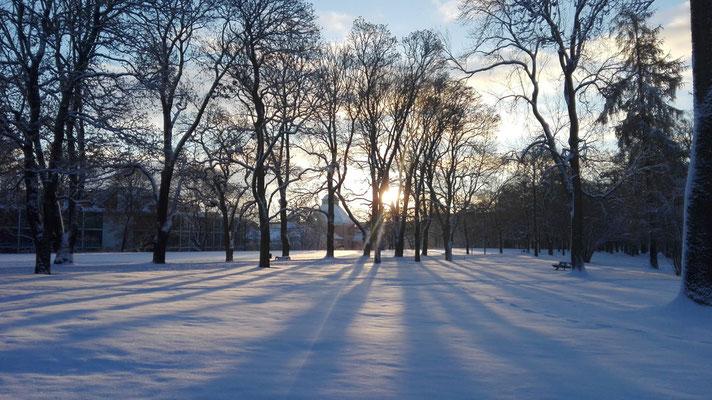 Winterlicher Sonnenaufgang in Uppsala