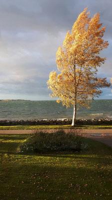 Ein stürmischer Herbsttag am Vätternsee in Vadstena