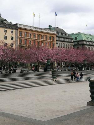 Kirschbäume vor Sta Eugenia