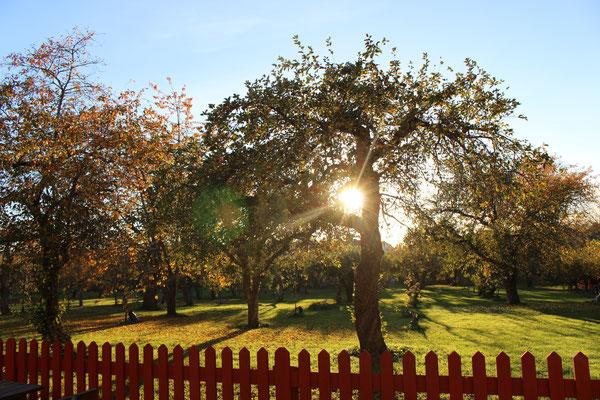 Der Garten des Pilgerzentrums in der Herbstsonne