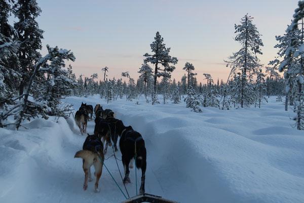Hundeschlittentour durch die traumhafte Winterlandschaft Lapplands