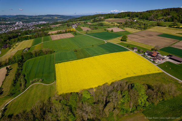 Rapsfeld oberhalb von Weinfelden (Ottenberg)