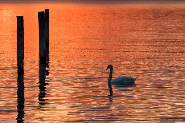 Bodensee: Ermatingen