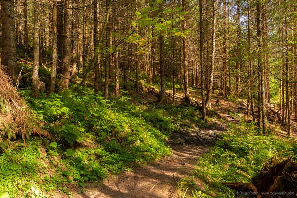 Wald beim Voralpsee oberhalb von Grabs