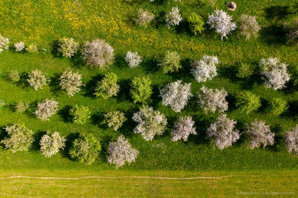 Blühende Obstbäume oberhalb von Weinfelden (Ottenberg)