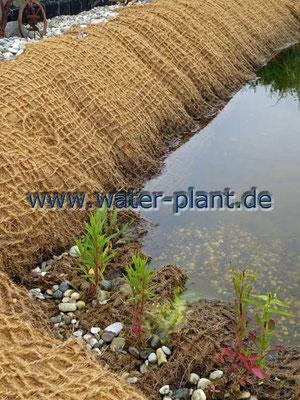 Teichpflanzen finden in Pflanzmatten sicheren Halt