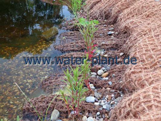 Sumpfzone mit Pflanzmatten