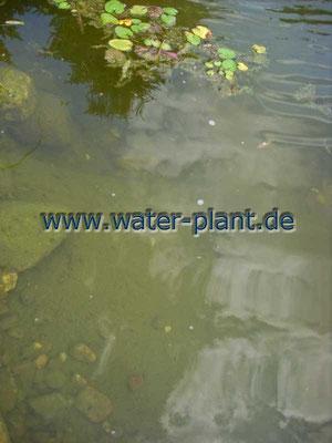 Xylitwalzen werden in der Flachwasserzone platziert
