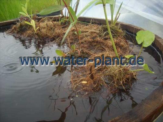 Pflanzrolle nach der Bepflanzung