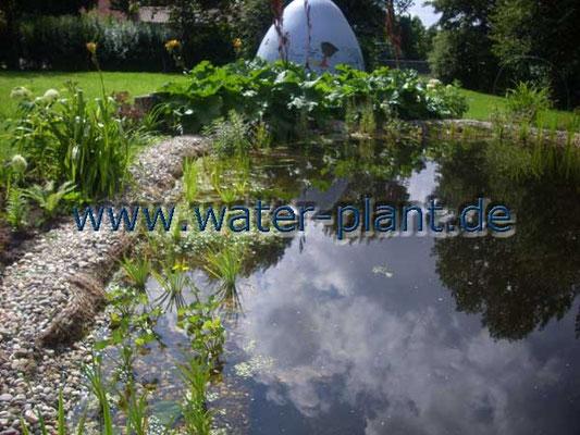 Pflanzmatte in der Sumpfzone nach der Bepflanzung