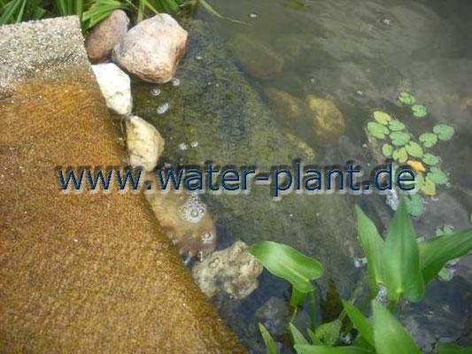 ideal ist eine Stelle am Bacheinlauf in den Teich