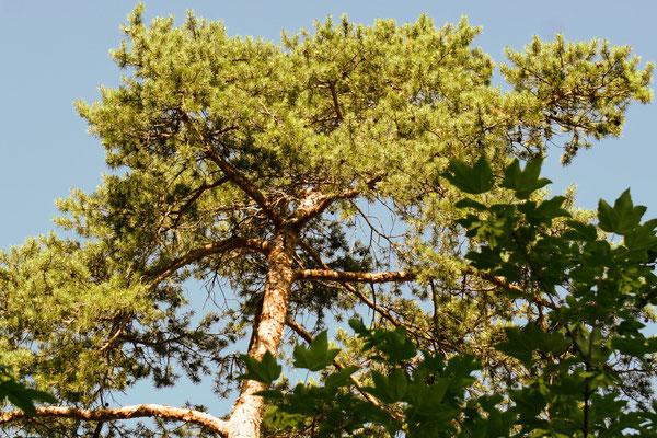 Baumwipfelpfad Neckertal, in Mogelsberg