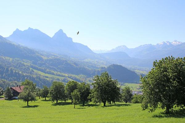 Oberhalb von Steinerberg SZ