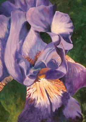 """""""Lilie"""", Öl/Platte, 50 x 70 cm"""