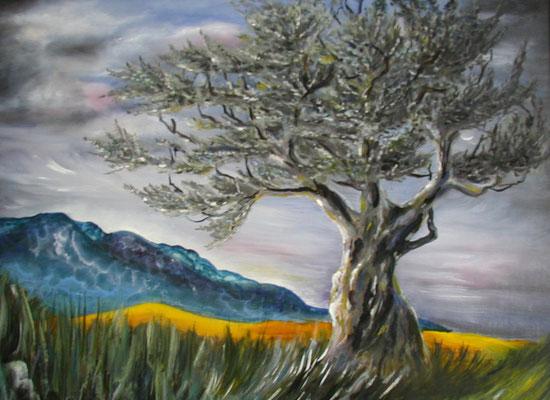 Olivenbaum 40x50