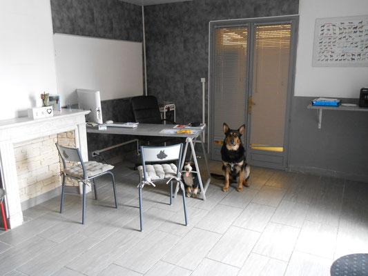 Bureau d'accueil educateur canin