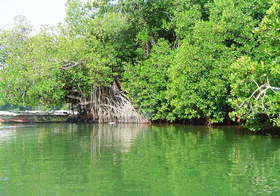 madu-river-mangrovenwald