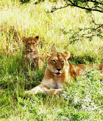 loewenfamilie-in-gorah