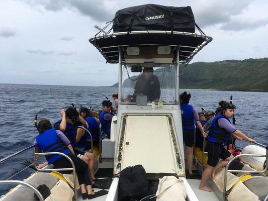 waianae-dolphin-watching