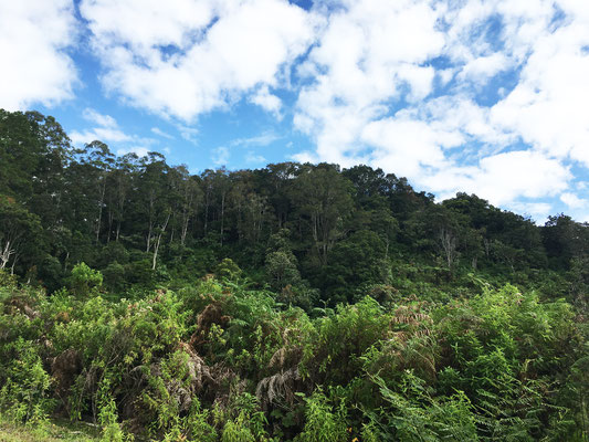 samosir-sumatra