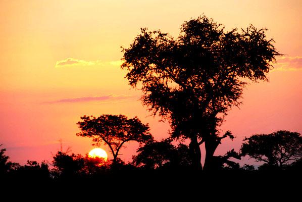 sabi-sand-safari-sonnenaufgang