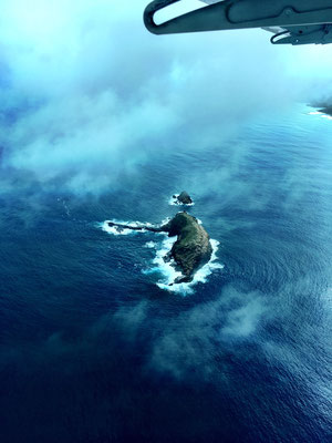 elefant-island
