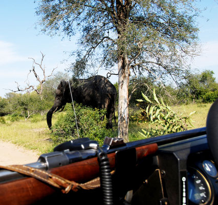 safari-suedafrika-sabi-sand