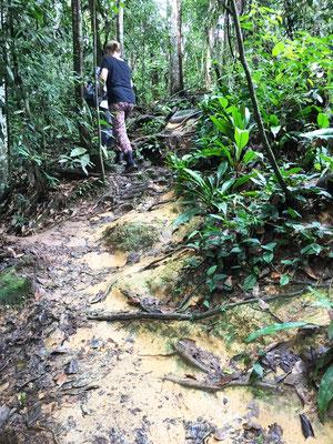 jungle-trekking-bukit-lawang