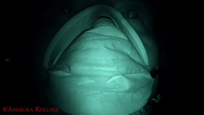 Sunny beim Wahrnehmungstest in der kleinen Kammer im Keller. #Ghosthunter #Geisterjäger #paranormal #Ghost