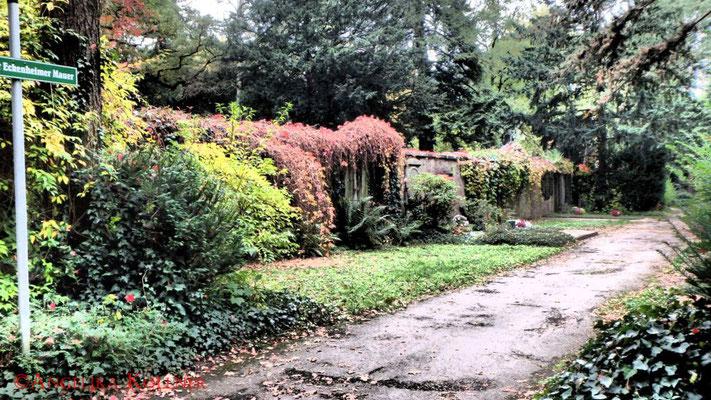 24 #Hauptfriedhof #Frankfurt #Landschaft #Ghosthunters