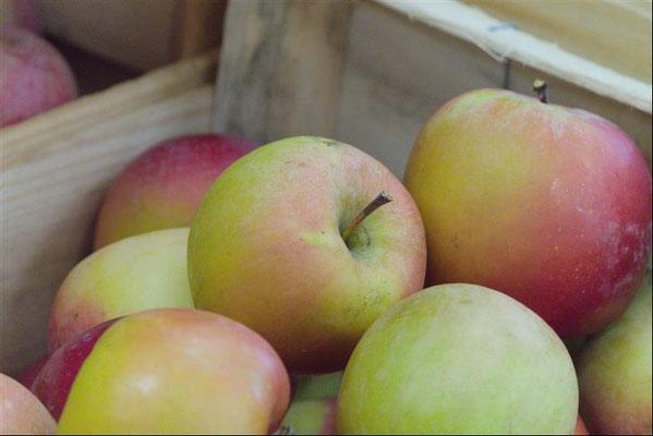 Pommes vendues au magasin Plein Champ
