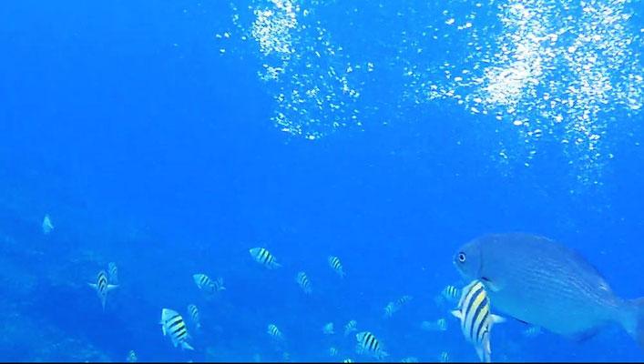 reef caraibi