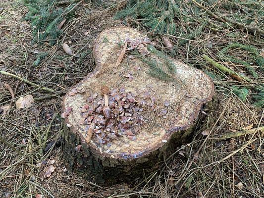Futterstelle von Eichhörnchen, Foto: www.schlaubatz.de