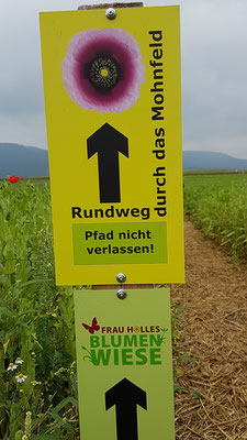 Mohnfeld in Germerode (Meißner)